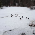  Turkeys in the snow.