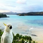  Overlooking Catseye Beach, with Cockatoo