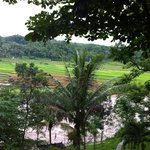 padi field n Progo river accross our room.
