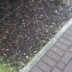 Cigarette Butts outside