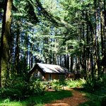  The cabins are set in a second-growth forest of 100-ft trees.