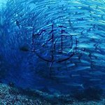 Barracuda Shoals