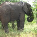  look at the dense habitat, elephant up close