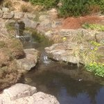  Pond in Sheffield Bot Garden