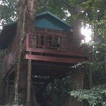  Romance Tree House