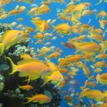 Experience A Colorful Life! (Red Sea Dive center)