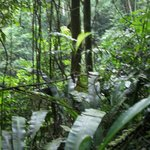  adjacent Cloud Forest