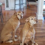 Belle and Lucy - the welcoming committee!