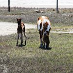 Foal and Mother on the Tour