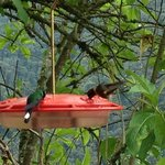  Hummingbird feeder San Jorge Tandayapa