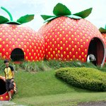 Pa Aseps Strawberry Farm near Garut Java