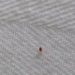  This is a picture of what I found in my room. If this is not a bedbug I would like to know what 