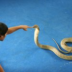 Ao Nang Snake Show