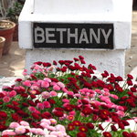  Bethany in Bloom