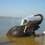  Bath with elephant