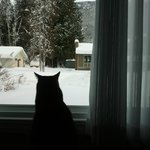  Teako snow gazing