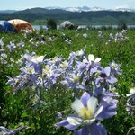 Camping in the Columbine