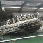  Penguins waiting for feeding time.