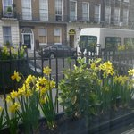  view from room to street with nice tulips on the window sill