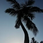  Palm tress