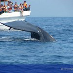 Whales Live - Whale and Dolphin Watching Tour