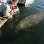 manatee came right up to the boatel dock