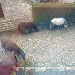 ponies in the yard!!!
