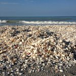  The shells in front of Mitchell&#39;s!
