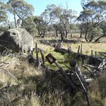 Remains of settlers' bush fencing, Waterhole Stockyard