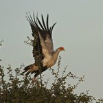 Secretary Bird - great photo ops