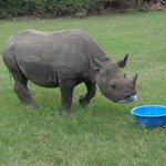 Rhino at the rehab centre