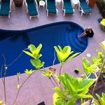  Pool Area - View from our Room