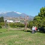 Codavolpe looking towards Etna