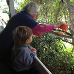 Sue feeding wild birds with Ethan