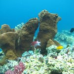  Kadidiri Paradise, Coral Garden Diving :)