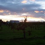 Sunset over the Apple Orchard