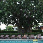  Pool (and the fabulous tree!)