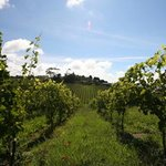 Longbush Wines