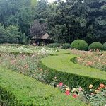 Lotus and Rose Garden