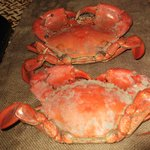 We caught some Crabs from Carmila (yummo) Eat your heart out MKR.
