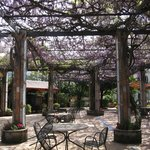 The Wisteria on the terrace