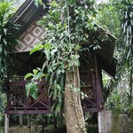 A typical bungalow in the world's oldest and most diverse tropical jungle!
