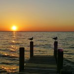 Sea Gulls watching the sunset