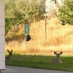  Deer enjoying some time by room 40