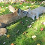  Bambi kissing resident kitty