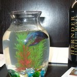  Pet fish for our stay...and wine!!