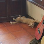  The cat acting as a doorstop