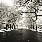 Sussex Ave winter scape