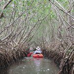 Mangrove Tunnel