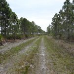 Myakka State Forest